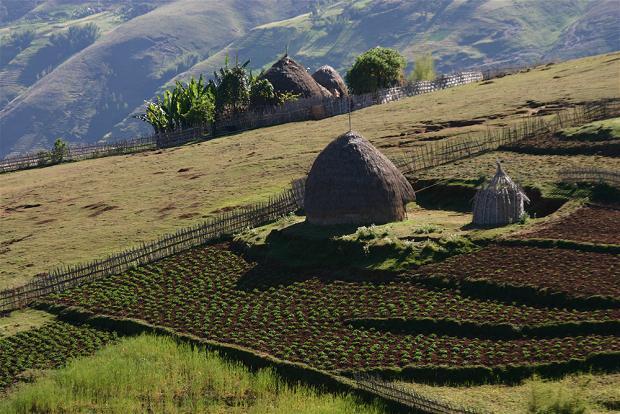 Gamo Highlands